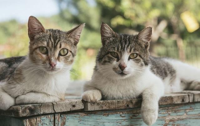 ovo mačke mrze petface