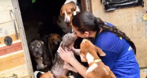 pronađeno 150 pasa petface