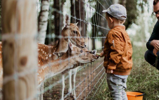 podrška životinjama u zoo vrtu, petface