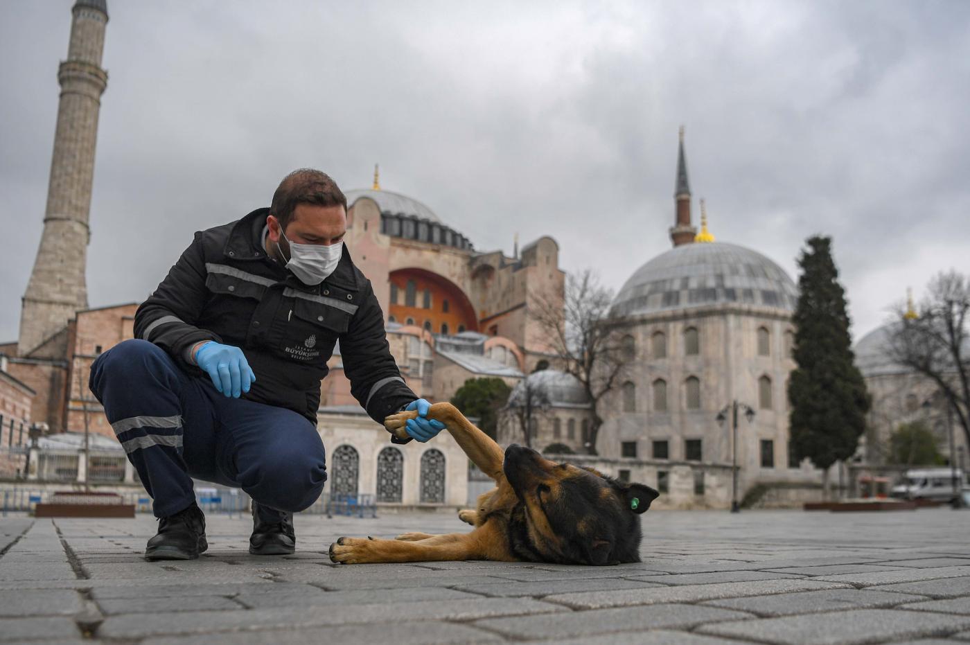 SVAKA ČAST ZA OVE LJUDE: Turska nije zaboravila na napuštene pse! (VIDEO)