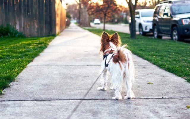 novi termini za šetnju pasa petface