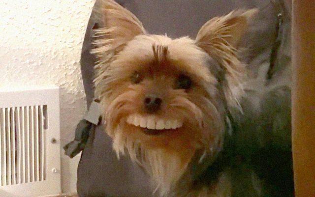pas sa lažnim zubima