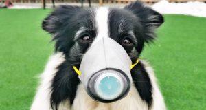 pas sa zaštitnom maskom