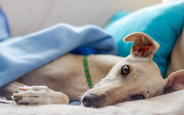 saveti veterinara petface
