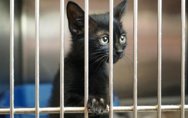 SVAKA ČAST: U Hrvatskoj uspostavljen Jedinstveni informacijski centar za izgubljene i napuštene životinje!(VIDEO)