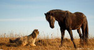 igra psa i konja