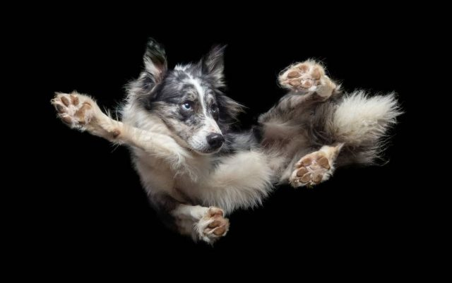 pas u letu