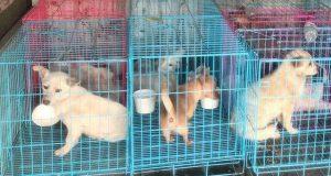 spaseni psi u kini