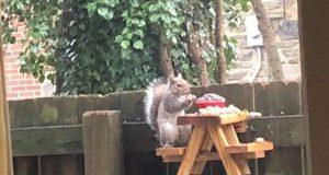 stočić za veverice petface