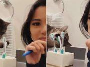 mačak koji pere zube petface