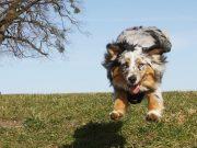 zašto moj pas beži petface