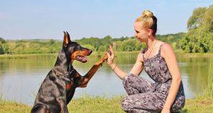 zašto psi dižu šapu petface