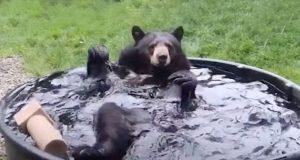 Medved se kupa