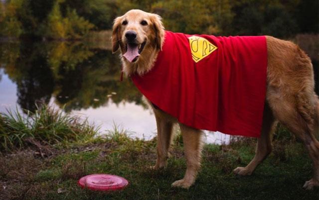 Fin superjunak