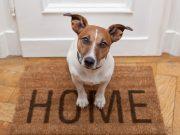 pas ispred vrata