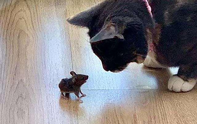 ovaj pravi miš