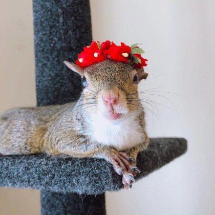 ISKORISTILA DRUGU ŠANSU: Ova spašena veverica živi život!