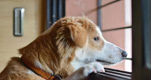 usamljen pas