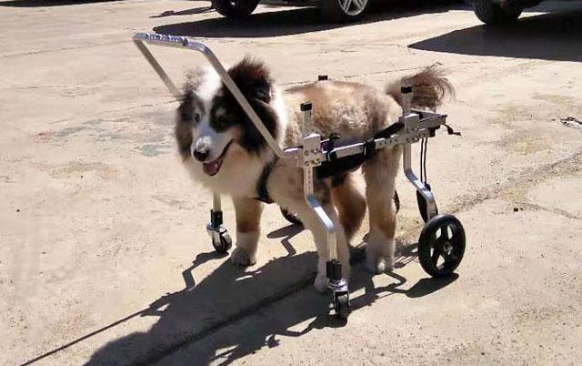 invalidsak kolica