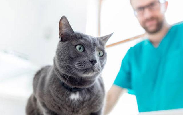 mačka i veterinar