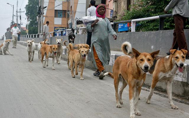 psi spasli ljuda