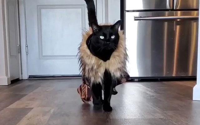 mačak top model