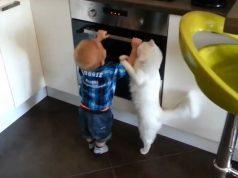 mačka heroj spasila dete