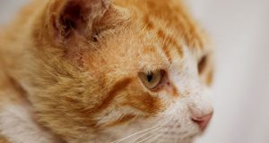 mačka Micika
