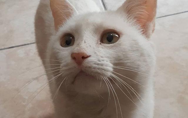 mačka čeka