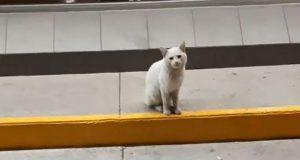 mačka ispred supermarketa