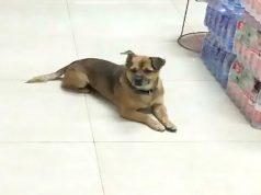 pas čeka vlasnika