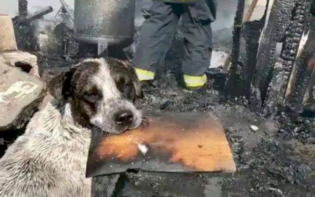 pas plače za domom