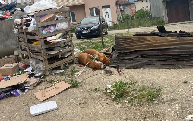 tela dva uginula psa