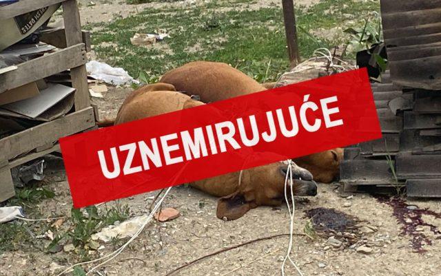 Ubijeni psi ostavljeni kraj kontejnera