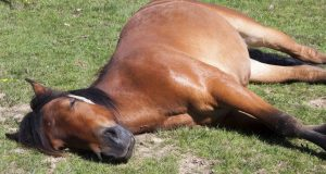 sapnuo konju