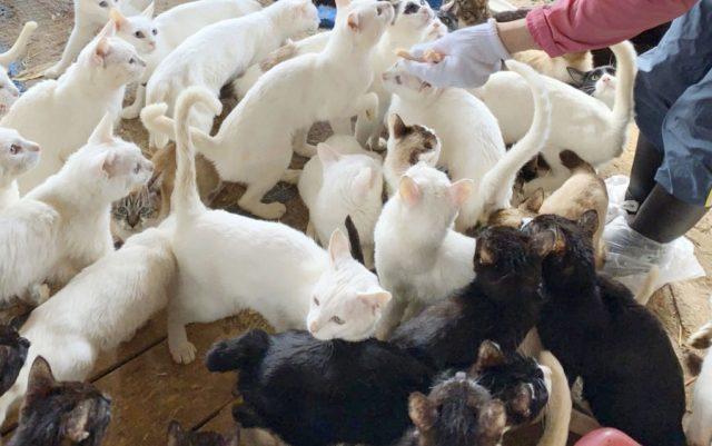 spašeno 238 mačaka