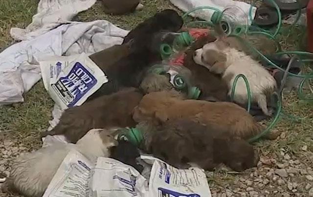 psi spaseni iz požara