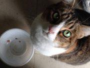 trinaestogodišnji mačak Džordž