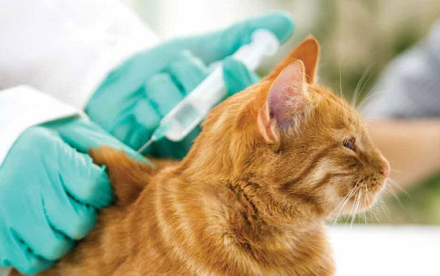 vakcinacija mačka