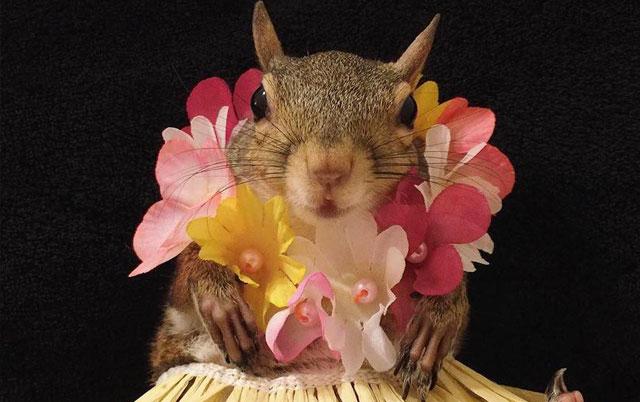 veverica zvezda instagrama