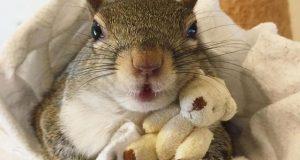 veverica živi život