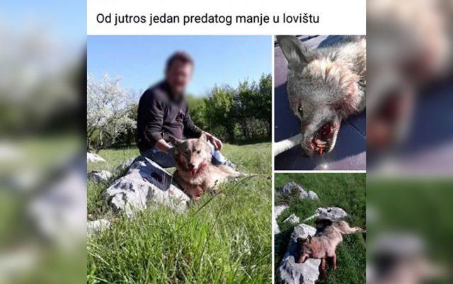 ubio vucicu