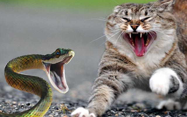 KONAČNO OTKRIVAMO - Zašto se mačke plaše krastavca?!