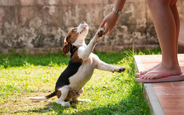 OTKRIVAMO - Da li psi mogu da se ZALJUBE!?