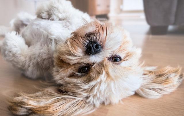 DA LI PSI IMAJU USPOMENE? Koliko psi zaista dobro pamte?