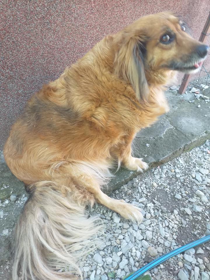 VLASNICA GA IZBACILA IZ STANA: Pas tužno čeka u dvorištu zgrade - pati i kopni!