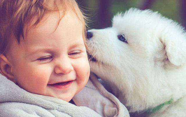 kako psi biraju omiljenu osobu