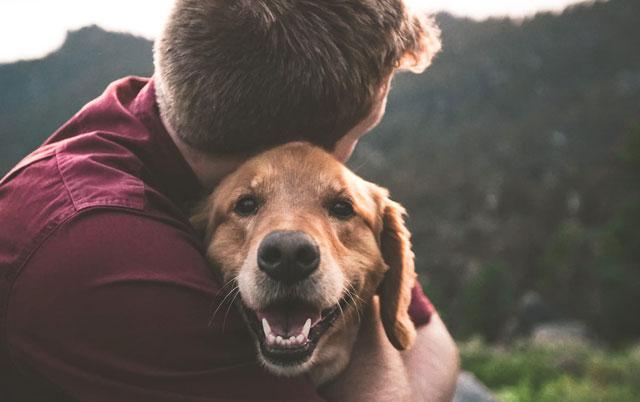 kako pas bira omiljenu osobu