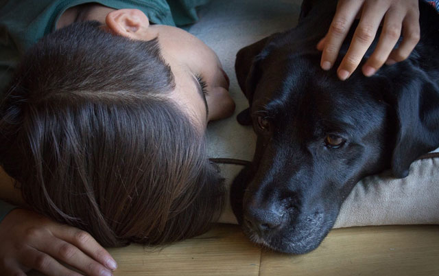 kako pas tuguje