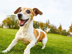 zašto psi polude posle kupanja